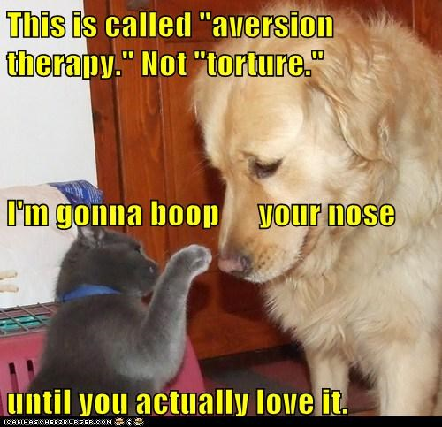 aversion,boop,caption,captioned,cat,dogs,nose,not,therapy,torture