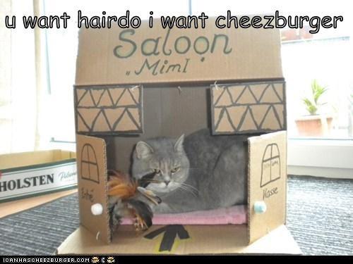 Cheezburger Image 5798243328