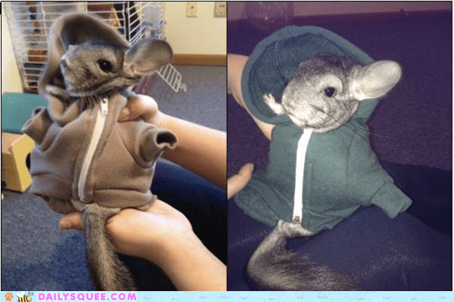acting like animals better chilling chinchilla Hall of Fame hoodie pun - 5798331136