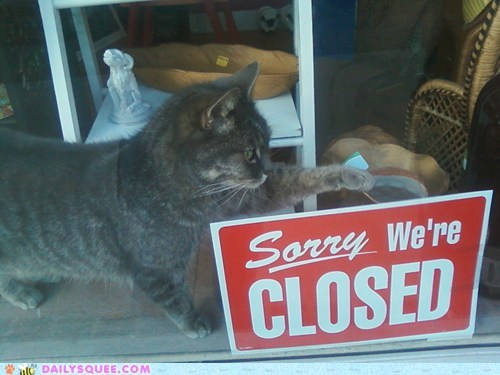 acting like animals,cat,closed,not sorry,shop,sign,sorry,store,storefront