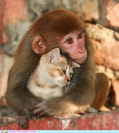 cat dont-touch friends friendship Hall of Fame Interspecies Love kitten monkey request touch - 5798355712