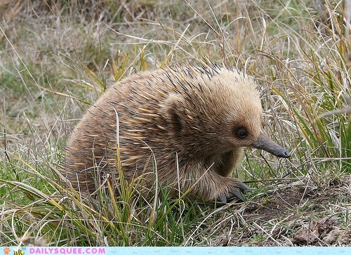 baby,echidna,equation,math,quote,relation,Short-beaked Echidna,tiny