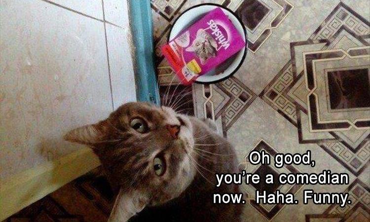 funny cat memes of feline sass