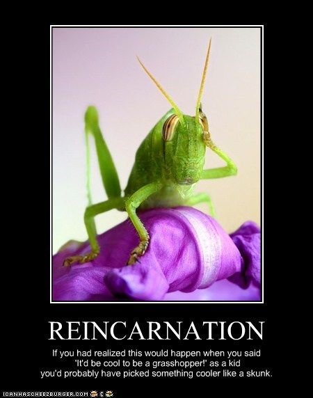REINCARNATION If you had realized this would happen when you said 'It'd be cool to be a grasshopper!' as a kid you'd probably have picked something cooler like a skunk.