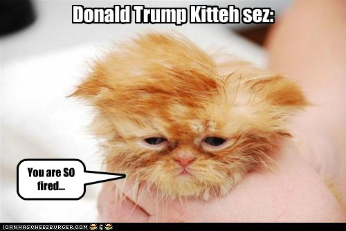 Donald Trump Kitteh sez: You are SO fired...