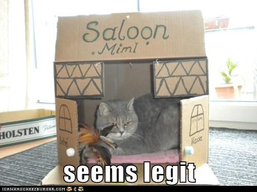 box,caption,captioned,cat,legit,pretend,pretending,saloon,seems