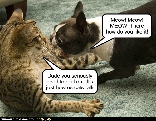 Meow! Meow! MEOW! There how do you like it! Dude you seriously need to chill out. It's just how us cats talk