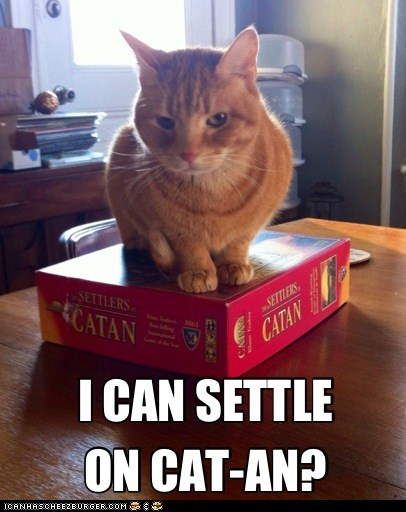 caption captioned cat catan i can pun question settle settlers of catan tabby - 5800340224