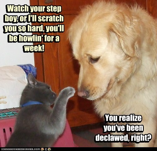 Watch your step boy, or I'll scratch you so hard, you'll be howlin' for a week! You realize you've been declawed, right? Watch your step boy, or I'll scratch you so hard, you'll be howlin' for a week! You realize you've been declawed, right?
