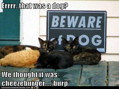Cheezburger Image 5800870144