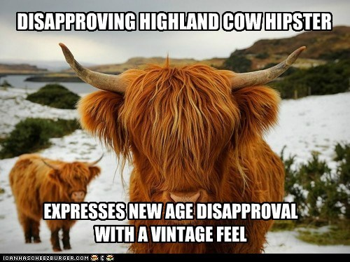 cow,emo,emo cow,highland cow,hipster,what