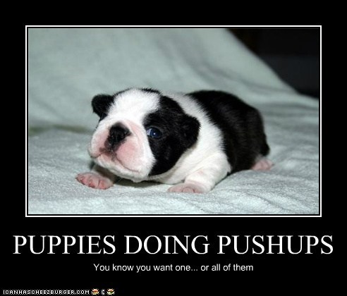 PUPPIES DOING PUSHUPS You know you want one... or all of them
