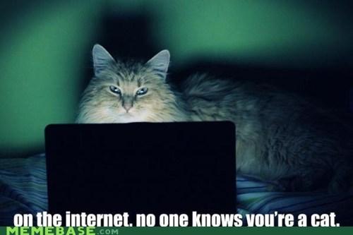 cat,computer,home,internet,Memes