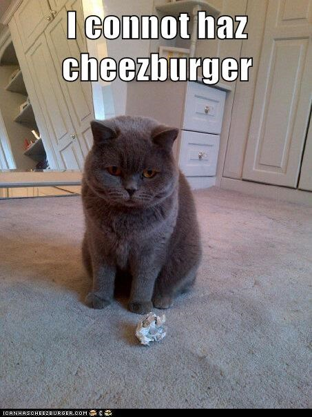 Cheezburger Image 5801343232