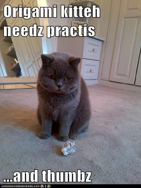 caption captioned cat needs origami practice thumbs