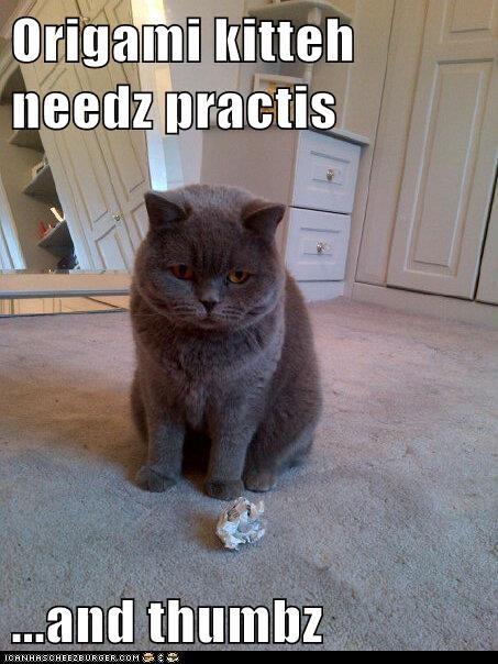 caption captioned cat needs origami practice thumbs - 5801678848