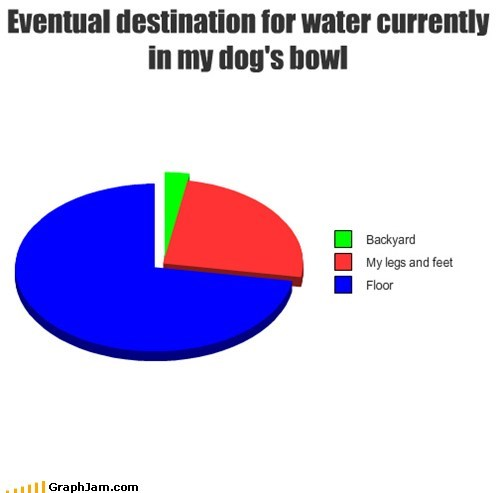 dogs face pets Pie Chart water