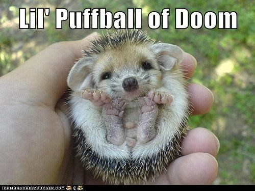 adorable animals doom hedgehog