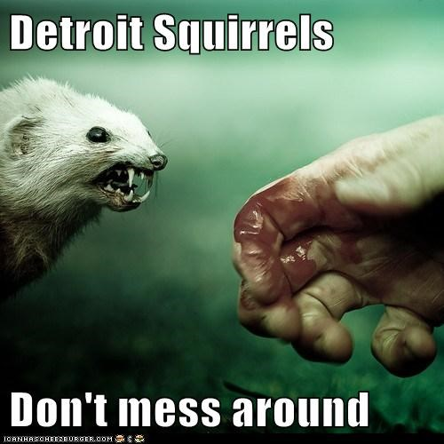 Detroit Squirrels Don't mess around