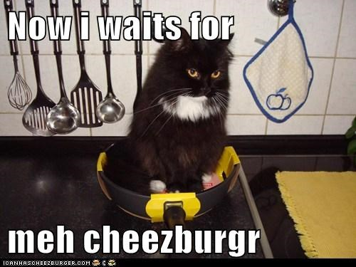 Cheezburger Image 5802089472