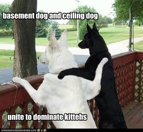 basement dog cat ceiling dog friends friendship kitteh kittehs unite - 5802415872