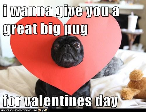heart heart hat love pug valentines-day-pug - 5802546432