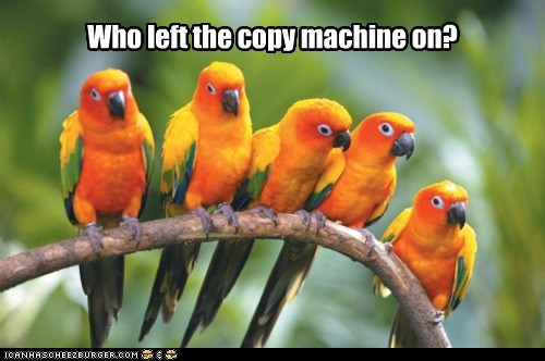 aniamls,birds,copy,copy machine,parrot,Sun Conure