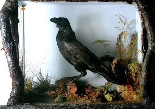 charles dickens,Edgar Allan Poe,the raven,TIL