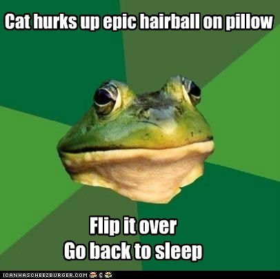 bed,Cats,flip over,foul bachelor frog,frogs,gross,hairballs,Pillow,sleep