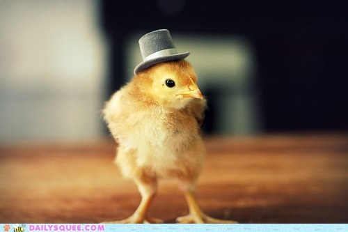 acting like animals,baby,chick,chicken,costume,hat,sophisticated,top hat
