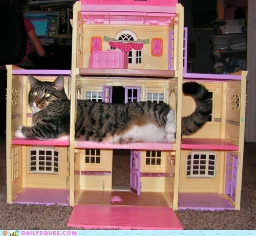 acting like animals,cat,cramped,crowded,doll house,fat,house,large,oversized,request,space,suggestion,upsize