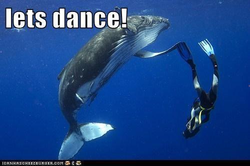 animals dance dancing scuba diver whale - 5803226112