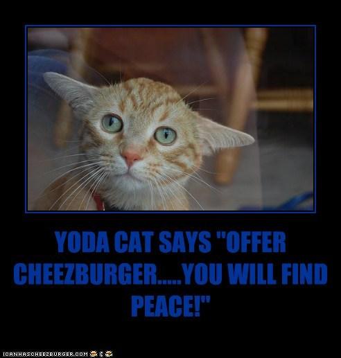 Cheezburger Image 5803339264