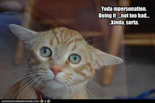 best of the week caption captioned cat Close Enough doint it right impersonation kinda sorta star wars tabby yoda