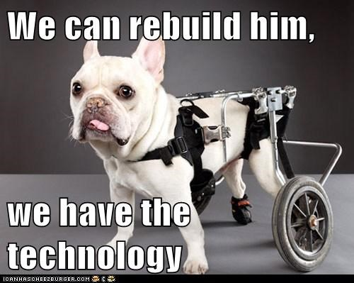 awesome,best of the week,disabled,french bulldogs,Hall of Fame,handicapped,technology,tongue,tongue out,we have the technology,wheelchair,wheels