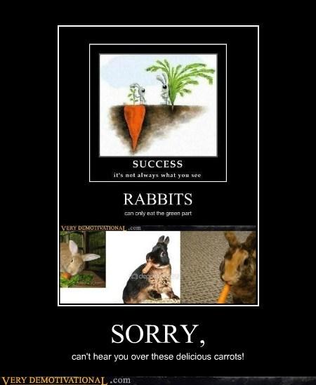 carrots food hilarious rabbits - 5804099584