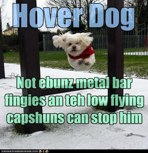 awesome fly flying hover dog jump jumping whatbreed - 5804249856