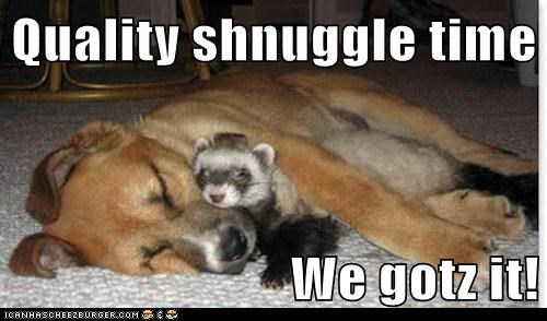 cuddle ferret friends interspecies friendship love snuggle whatbreed - 5804982528