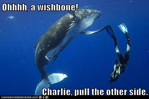 caption,captioned,diver,human,shape,whale,wishbone