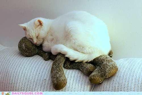 asleep,cat,moose,napping,reader squees,sleeping,stuffed animal,toy