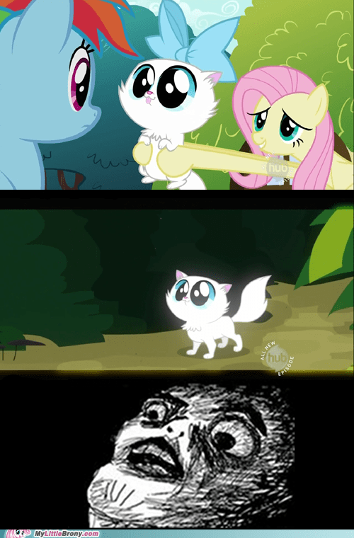 cat,comic,comics,fluttershy,puddy cat,rainbow dash