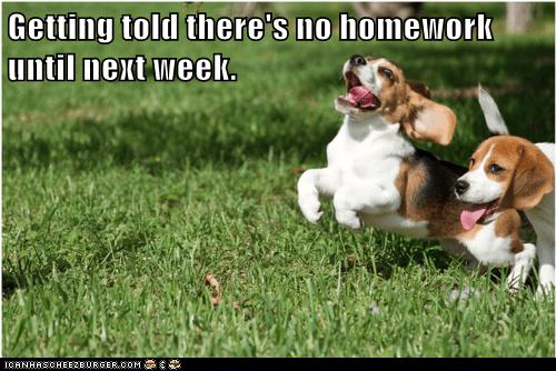 beagle beagles grass homework outdoors outside play playing running - 5805651456