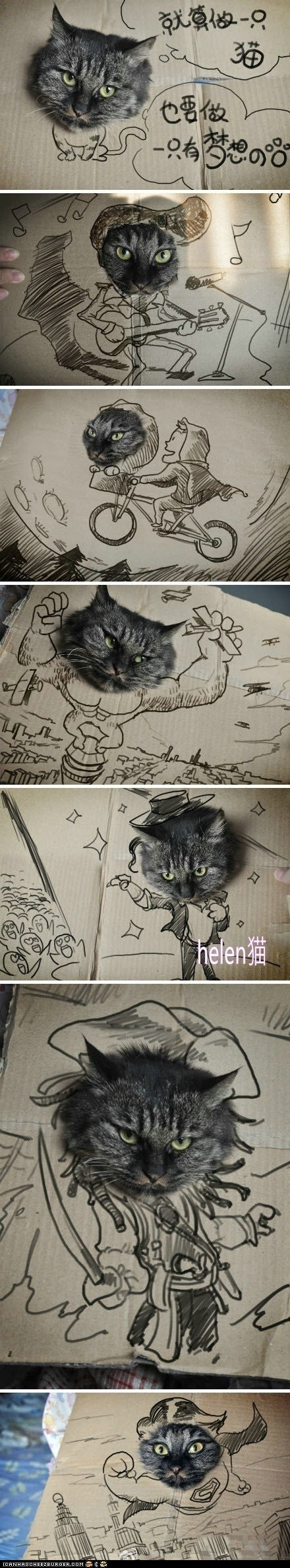 Cardboard Dreams Cat