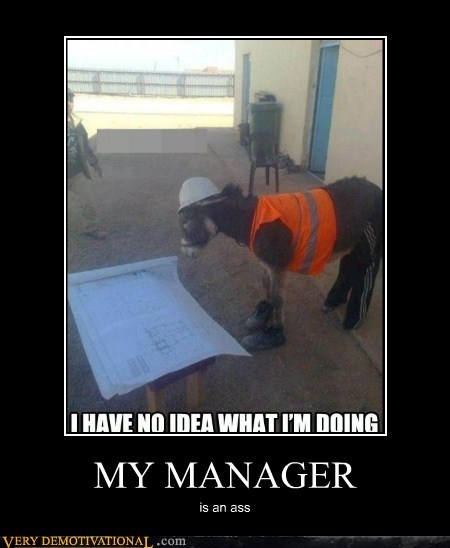 construction donkey hilarious manager wtf - 5806219264