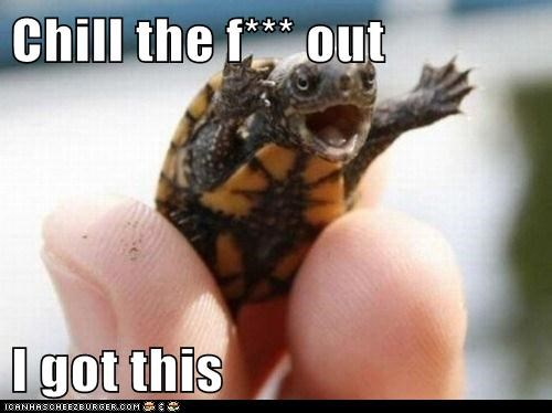 animals chill out i got this turtle - 5806327552
