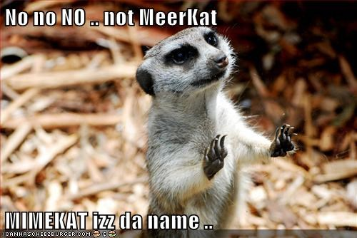 No no NO .. not MeerKat MIMEKAT izz da name ..