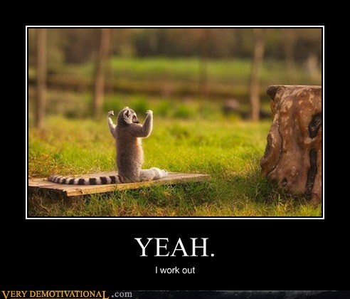 hilarious,lemur,work out,wtf
