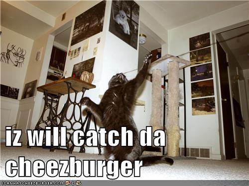 Cheezburger Image 5806948608