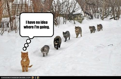 caption captioned cat Cats confused destination leading line location no idea - 5807043328