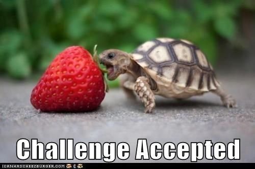 accepted,baby,best of the week,caption,captioned,challenge,Challenge Accepted,difference,do want,noms,size,strawberry,tiny,turtle
